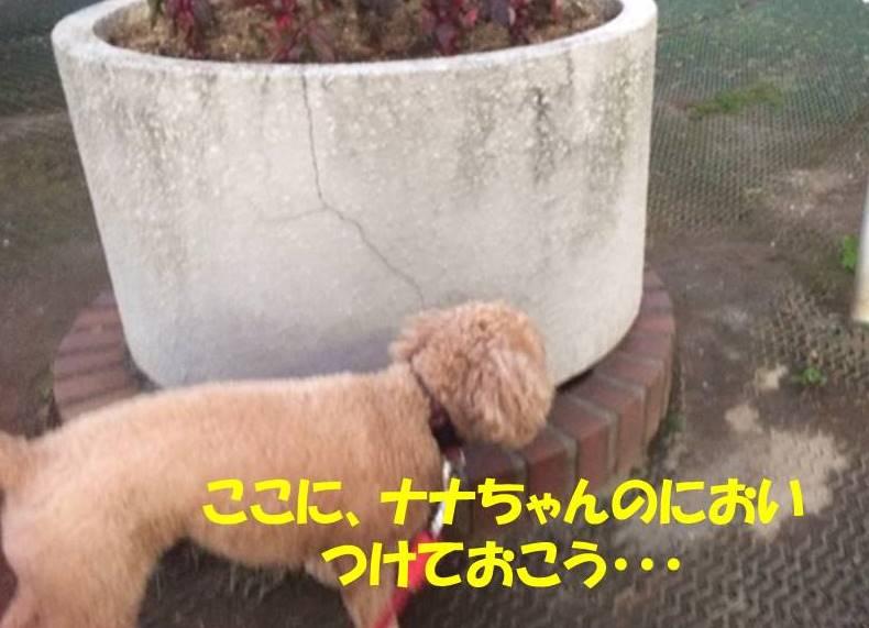 f:id:nanachan59:20171031095656j:plain