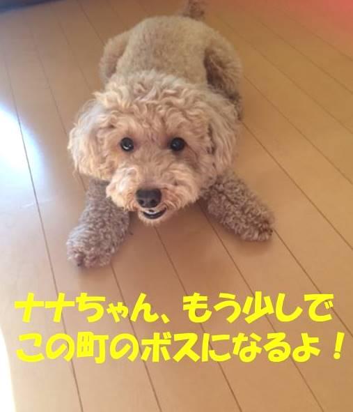 f:id:nanachan59:20171031105620j:plain