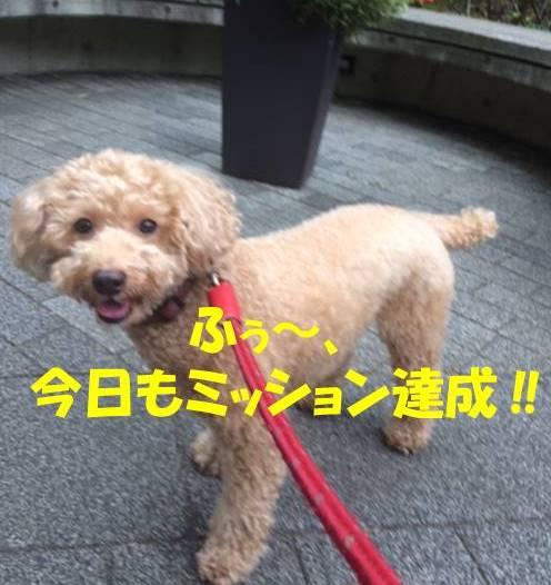 f:id:nanachan59:20171031111516j:plain
