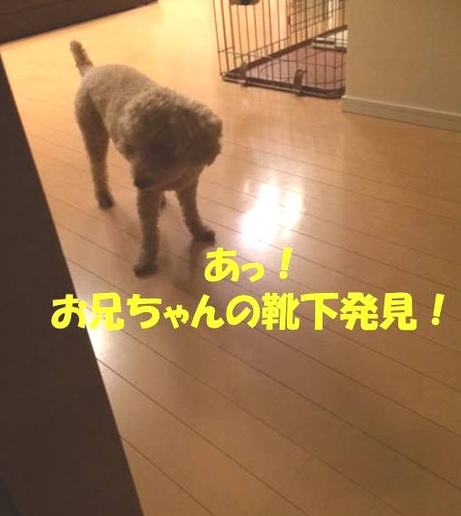 f:id:nanachan59:20171101180640j:plain