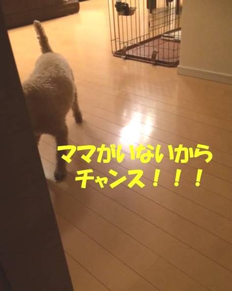 f:id:nanachan59:20171101181148j:plain