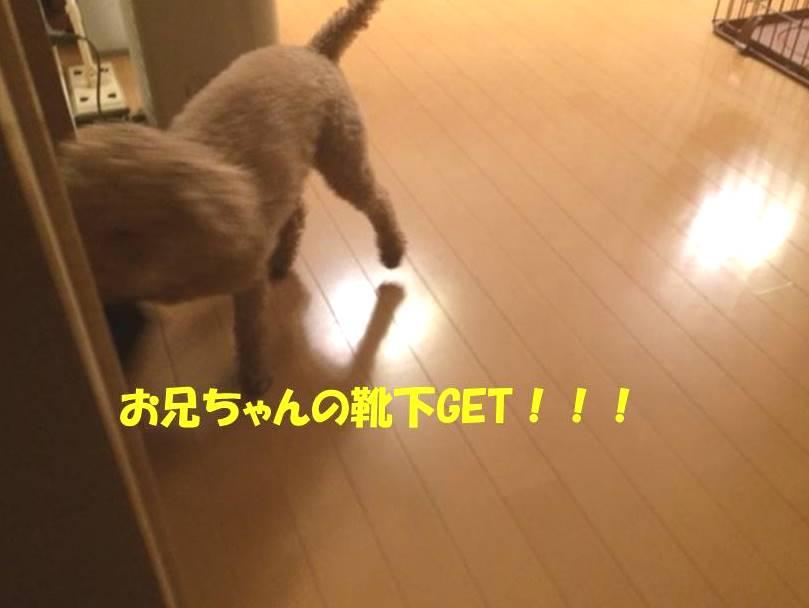 f:id:nanachan59:20171101181631j:plain
