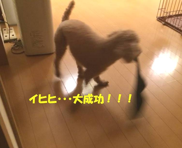 f:id:nanachan59:20171101182036j:plain