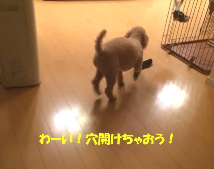 f:id:nanachan59:20171101182540j:plain