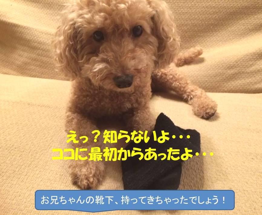 f:id:nanachan59:20171101183310j:plain