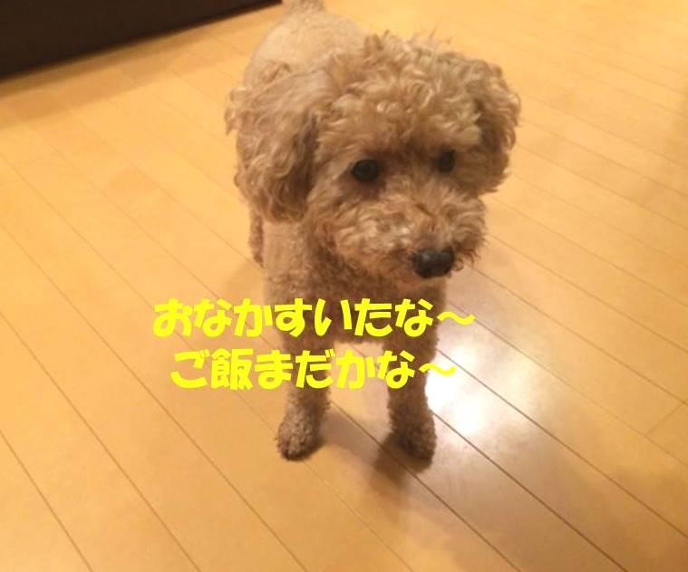 f:id:nanachan59:20171102182010j:plain