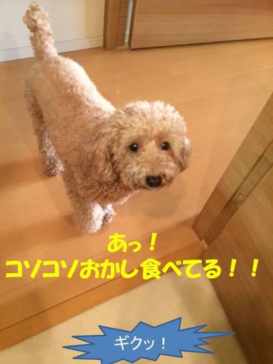 f:id:nanachan59:20171102194207j:plain