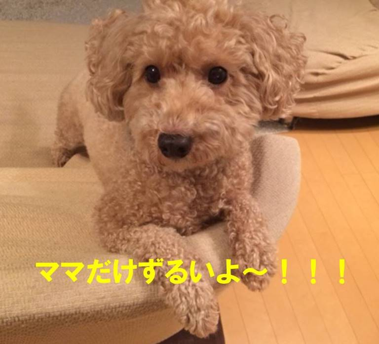 f:id:nanachan59:20171102205240j:plain