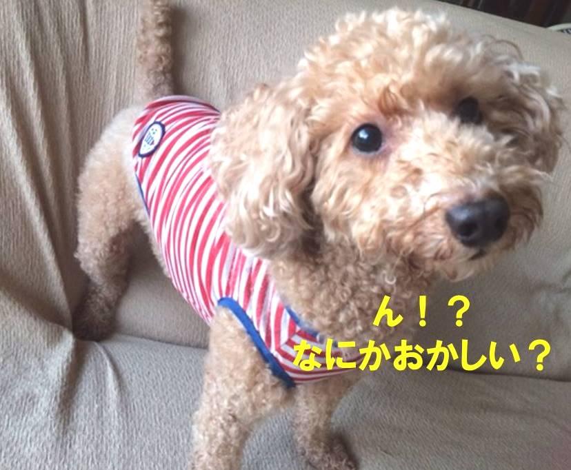 f:id:nanachan59:20171103173620j:plain