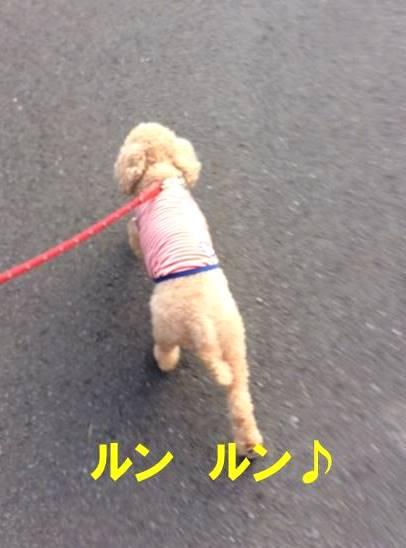 f:id:nanachan59:20171103174051j:plain