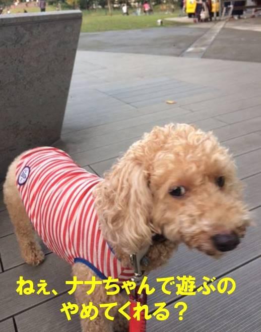 f:id:nanachan59:20171103174639j:plain
