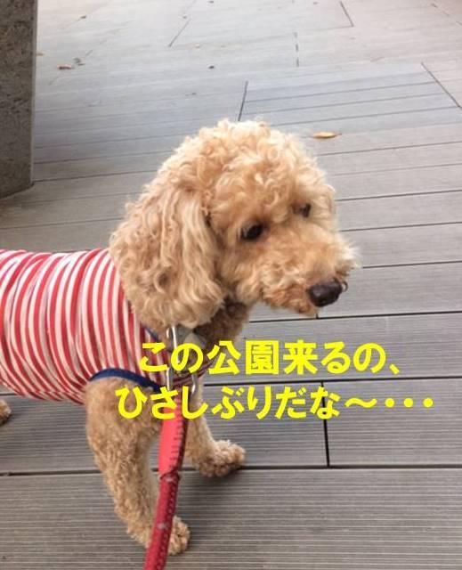 f:id:nanachan59:20171103182121j:plain
