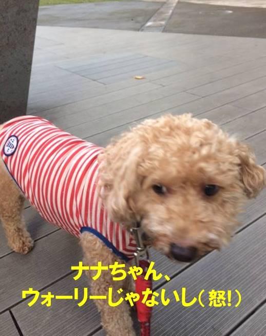 f:id:nanachan59:20171103210135j:plain