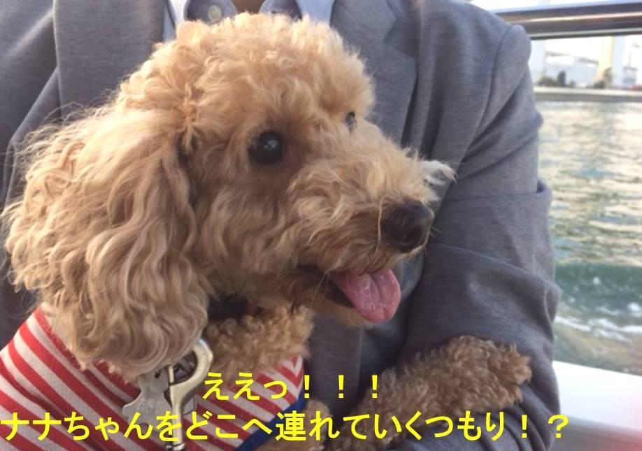 f:id:nanachan59:20171105073330j:plain