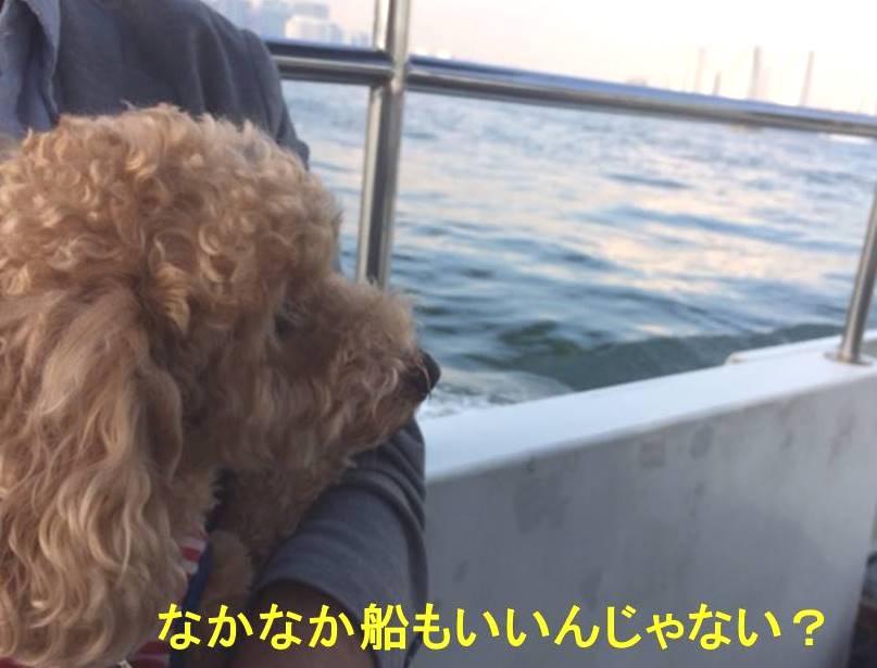 f:id:nanachan59:20171105114917j:plain