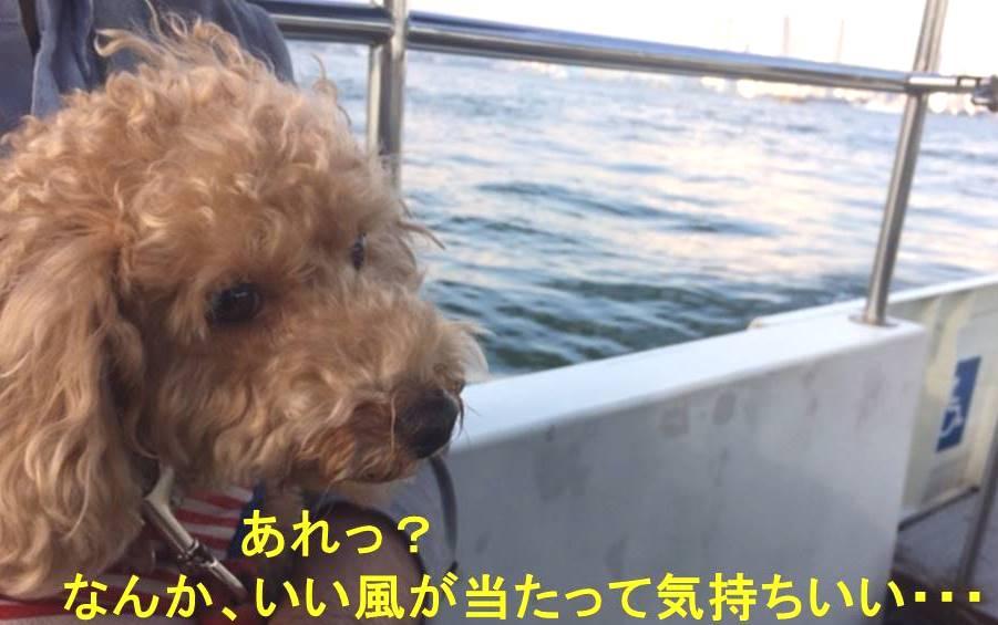 f:id:nanachan59:20171105134613j:plain