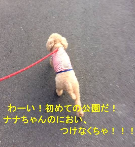 f:id:nanachan59:20171106150109j:plain