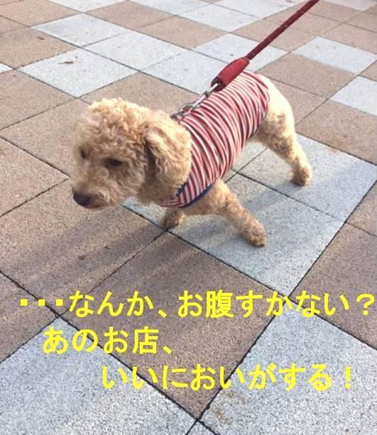f:id:nanachan59:20171106151103j:plain