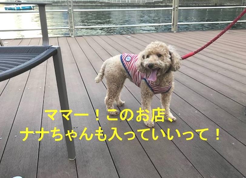 f:id:nanachan59:20171106151848j:plain