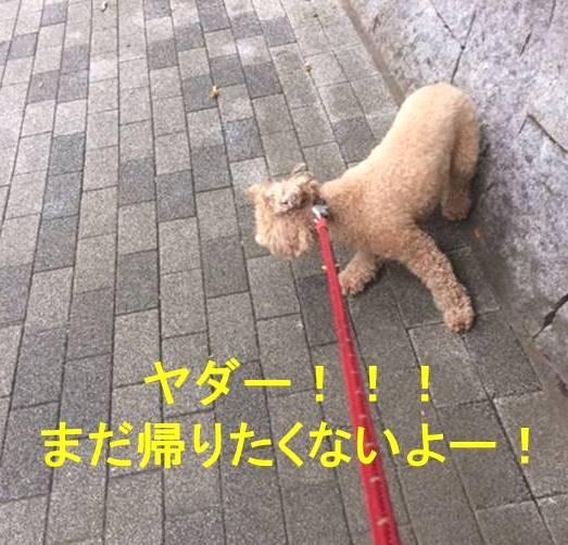 f:id:nanachan59:20171106154250j:plain