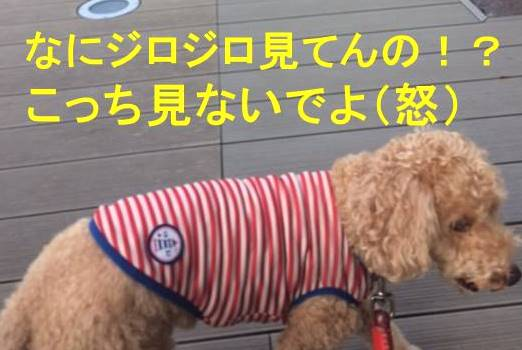 f:id:nanachan59:20171106203028j:plain