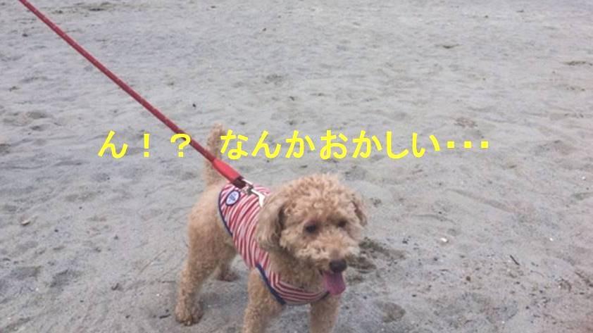f:id:nanachan59:20171107145512j:plain