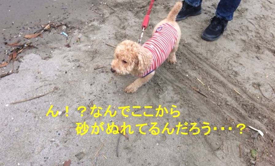 f:id:nanachan59:20171107150715j:plain