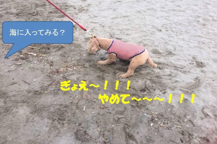 f:id:nanachan59:20171107153410j:plain