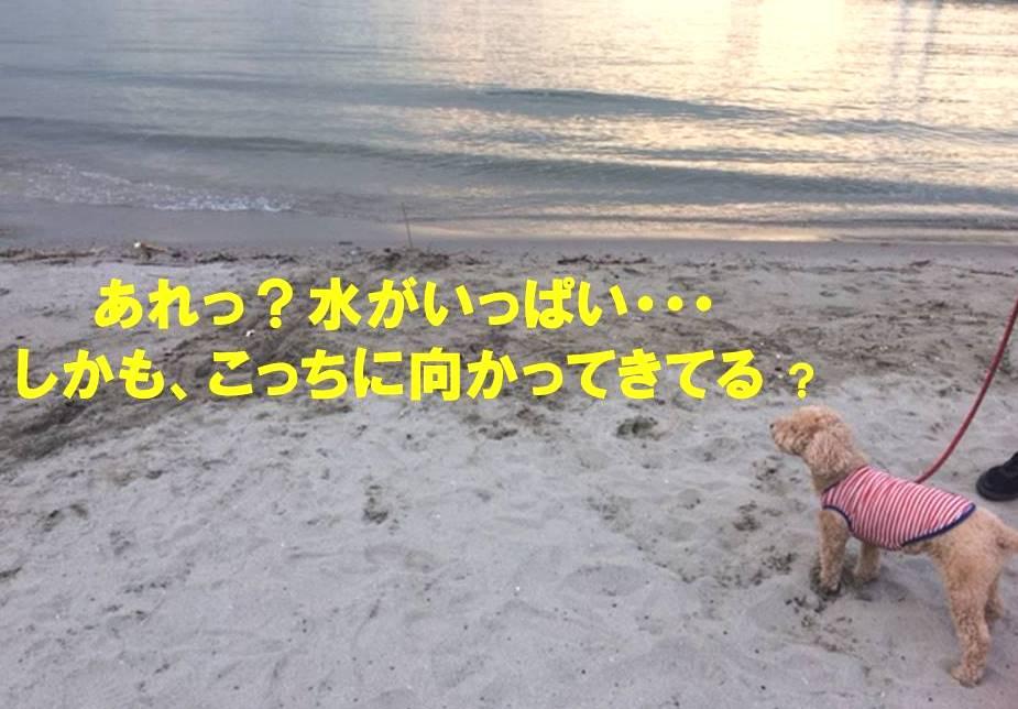 f:id:nanachan59:20171107214738j:plain