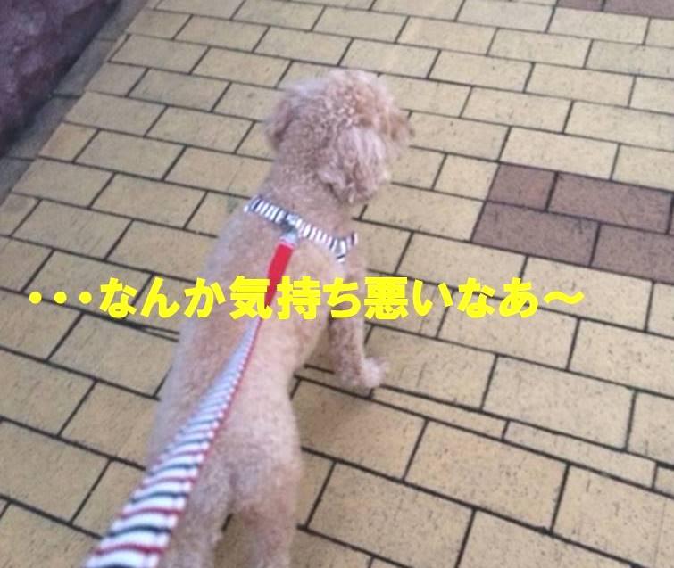 f:id:nanachan59:20171108150822j:plain