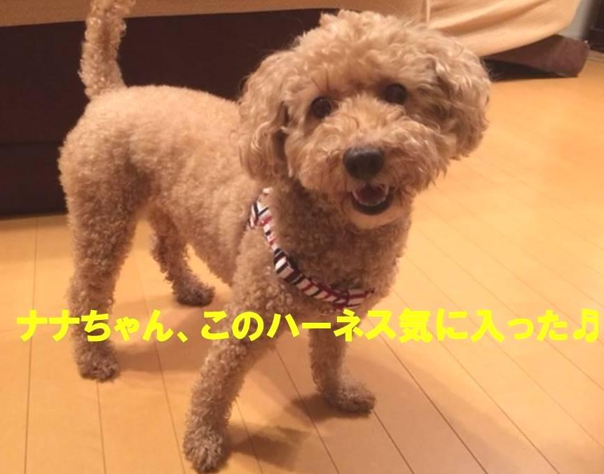 f:id:nanachan59:20171108171348j:plain