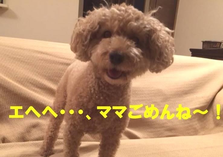f:id:nanachan59:20171109151621j:plain