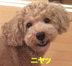 f:id:nanachan59:20171110213305j:plain