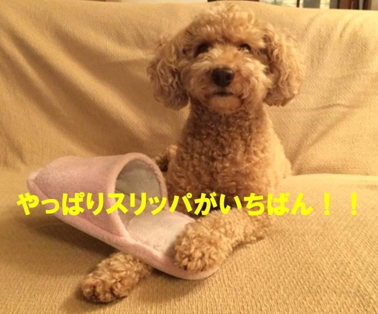 f:id:nanachan59:20171110214231j:plain
