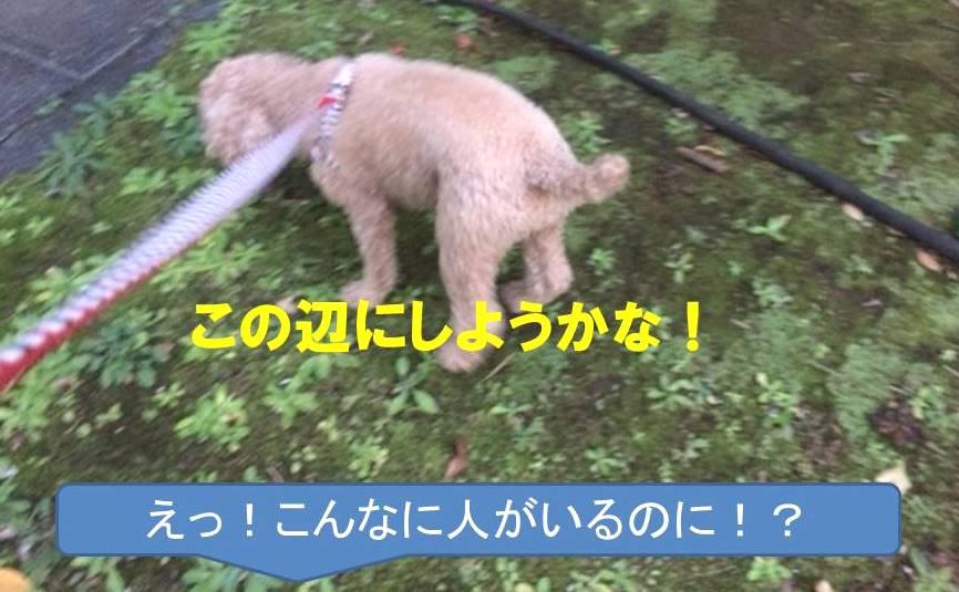 f:id:nanachan59:20171111205301j:plain