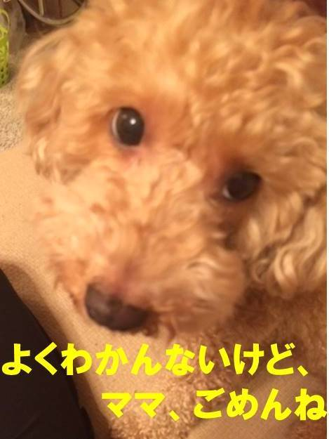 f:id:nanachan59:20171111210940j:plain