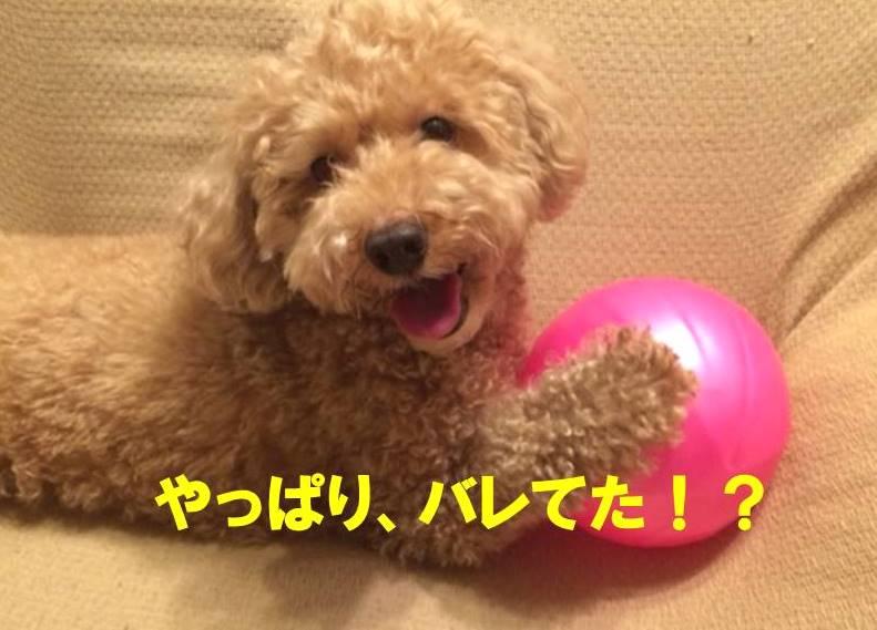 f:id:nanachan59:20171112003518j:plain