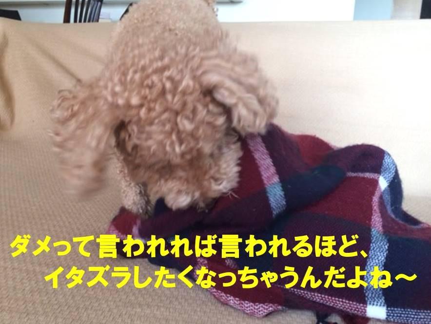 f:id:nanachan59:20171112005903j:plain