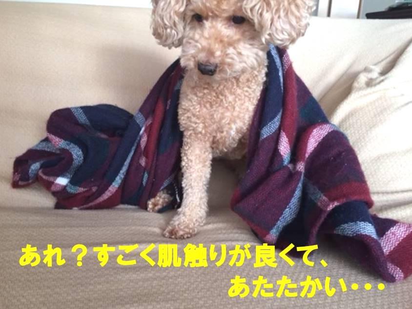 f:id:nanachan59:20171112010429j:plain