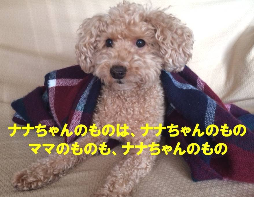 f:id:nanachan59:20171112023836j:plain