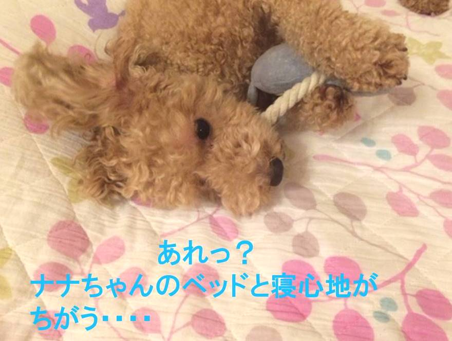 f:id:nanachan59:20171115002316j:plain