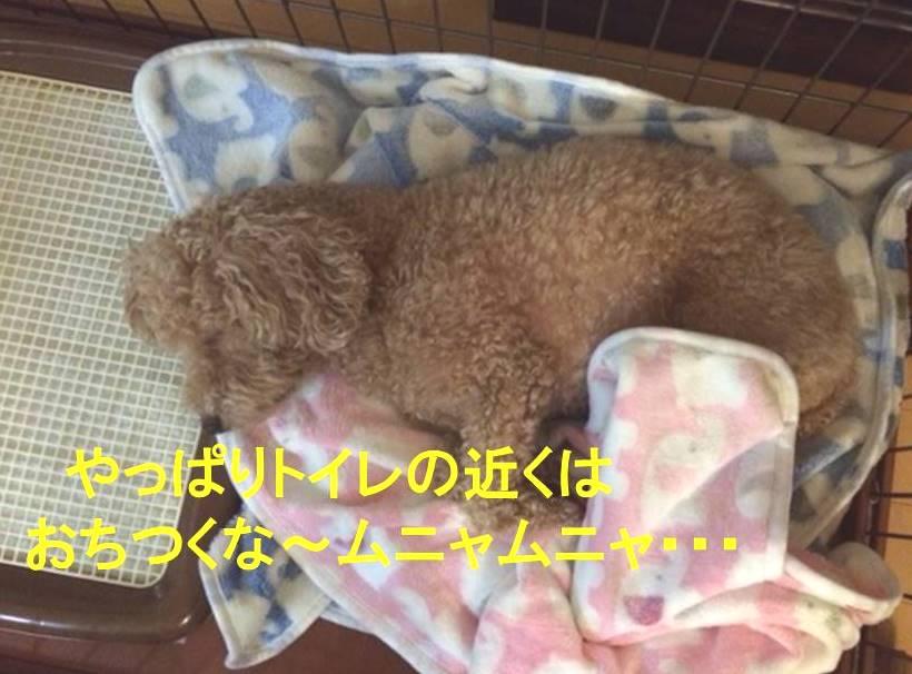 f:id:nanachan59:20171115003542j:plain