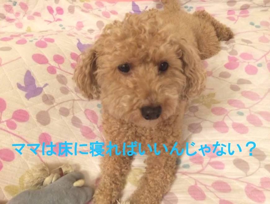 f:id:nanachan59:20171115172558j:plain