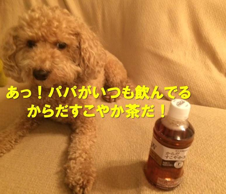 f:id:nanachan59:20171119204623j:plain