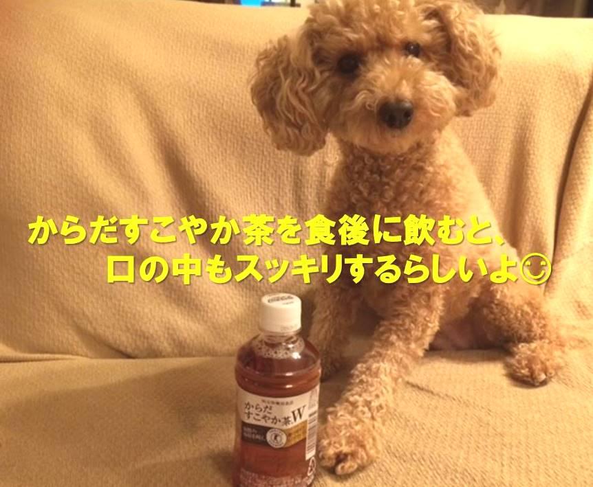 f:id:nanachan59:20171119205556j:plain