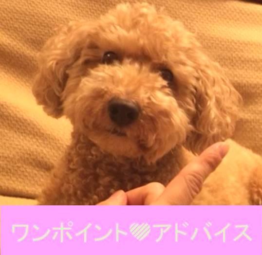 f:id:nanachan59:20171119210338j:plain