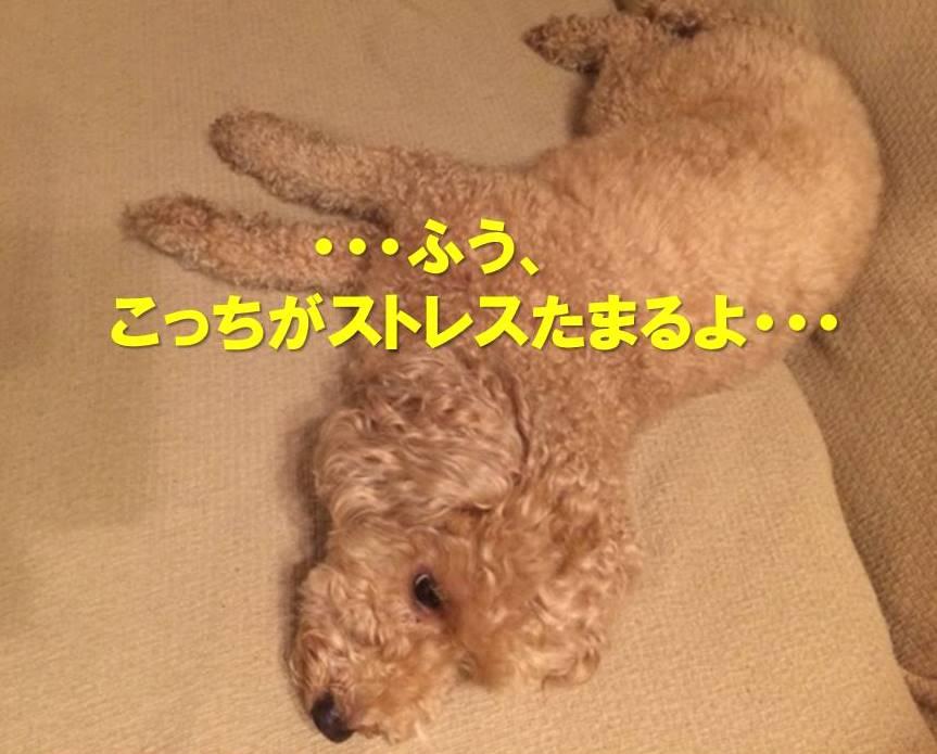 f:id:nanachan59:20171120191426j:plain