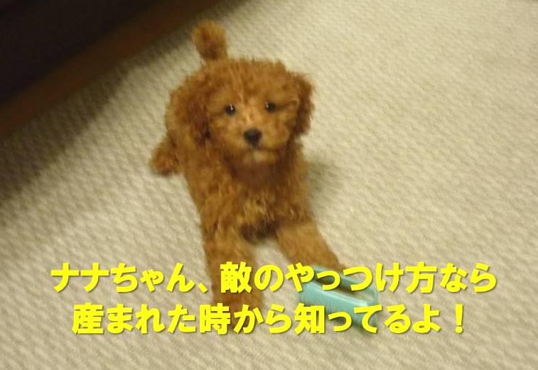 f:id:nanachan59:20171121213044j:plain