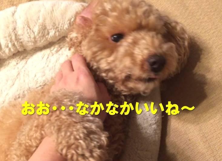 f:id:nanachan59:20171122220821j:plain