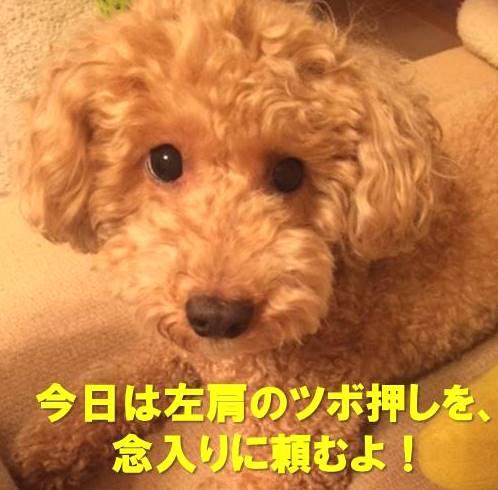 f:id:nanachan59:20171123154832j:plain